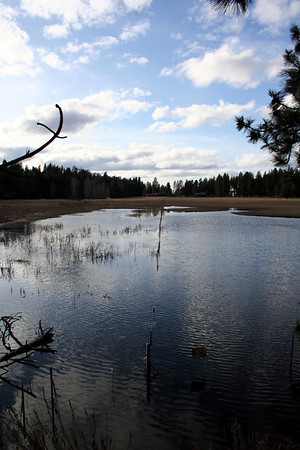 This is the field on the other side of the dike at Honeysuckle Beach.  The water has floded the field.  Feb 2011